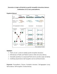 thumnail for Publication_2_Single-Cell_Identity_Generated_by_Combinatorial_Homophilic_Interactions_between_______and___Protocadherins_Cell_2014.pdf