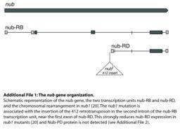 thumnail for 1741-7007-11-99-S1.PDF