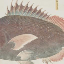 One Fish from the Shurin Te...