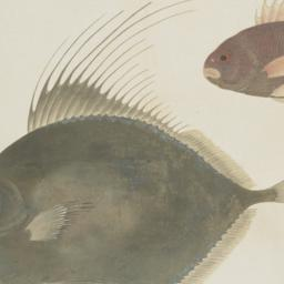 Group of Two Fish from the ...