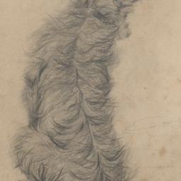 A     Terrier