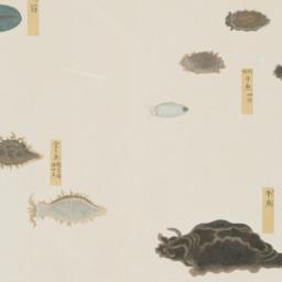 Group of Eight Fish with Mu...