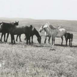 Paul Cloudman's Grazing Horses