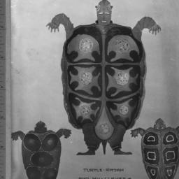 turtle rajah and his slaves